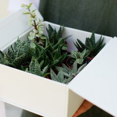 Get greenery delivered to your door with Currumbin&#8217&#x3B;s Plants in a Box