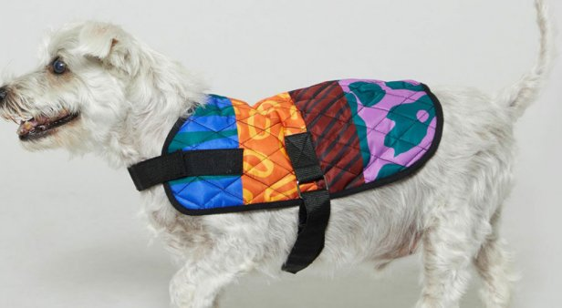 Keep Aussie pets safe with a limited-edition PetRescue x Gorman dog coat