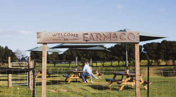 As fresh as it gets – Farm & Co puts its own produce on plates with its new on-site cafe